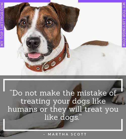 short funny dog quotes